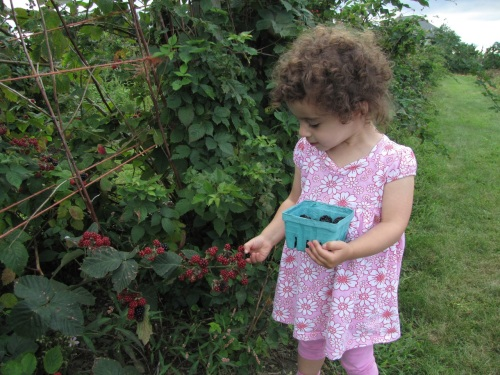 Picking Berries at Sweet Berry Farm in Middletown, RI.