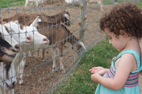 simmons farm s petting zoo the rhode less traveled a rhode island