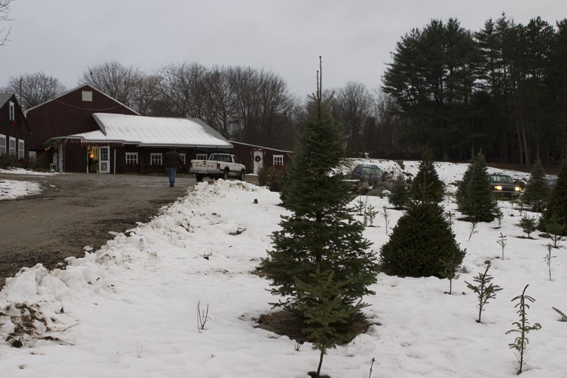 Christmas Tree Farms In Rhode Island