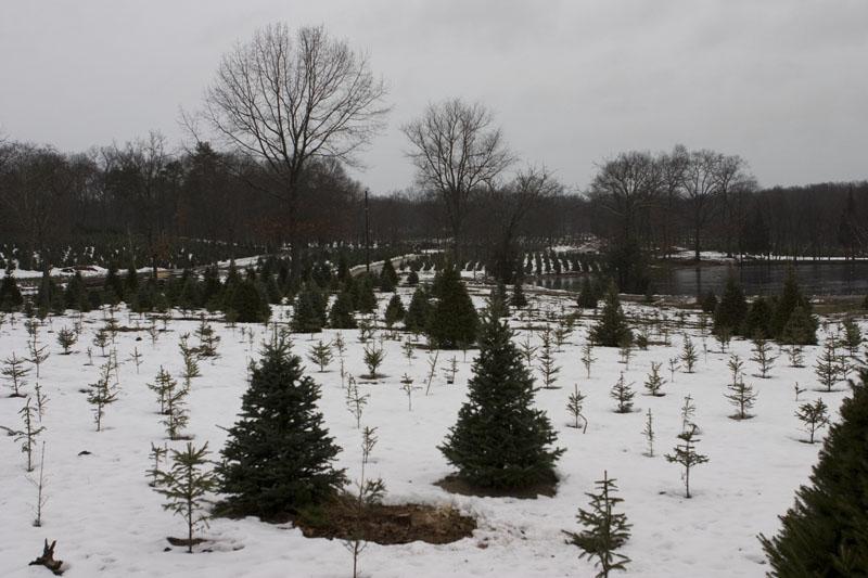 Lockwood s tree farm nice trees for a reasonable price plus some