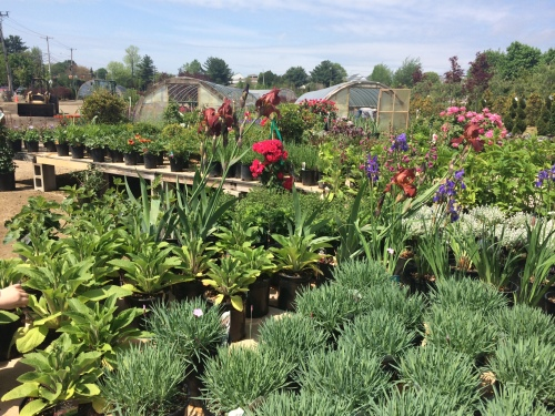 A section of Briden Nursery's selection of plants.